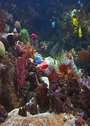 Rent Plasma/LCD Art: Fish Tank Online DVD Rental