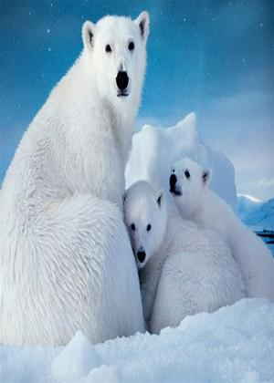 Rent Imax: Big Freeze: Alaska, Antartica, Great North Online DVD Rental