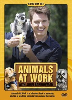 Rent Animals at Work with John Barrowman Online DVD Rental