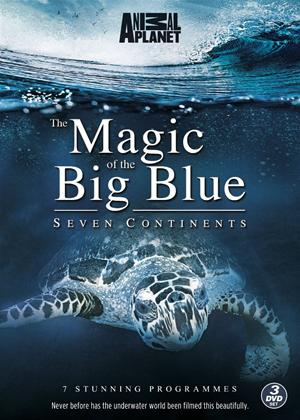 Rent The Magic of the Big Blue: Seven Continents Online DVD Rental