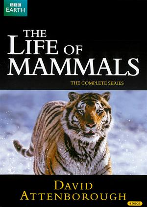 David Attenborough: The Life of Mammals: Series Online DVD Rental