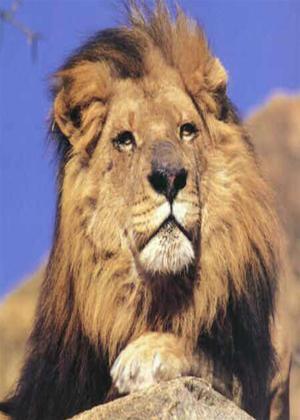 Wild Africa: Part 2 Online DVD Rental