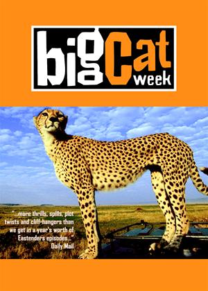 Big Cat Week Online DVD Rental