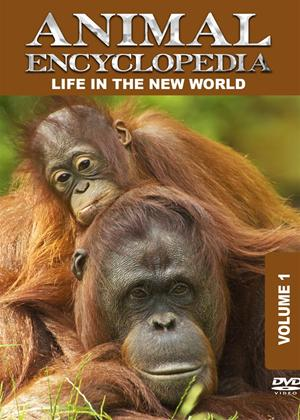 Rent Animal Encyclopedia: Vol.1: Life in the New World Online DVD Rental