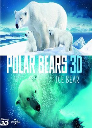 Rent Polar Bears 3D: Ice Bear Online DVD Rental