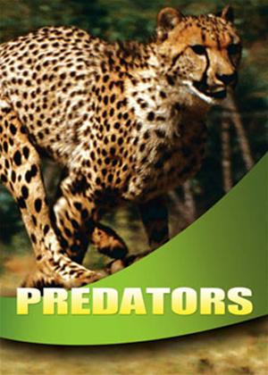 Wildlife: Predators Online DVD Rental