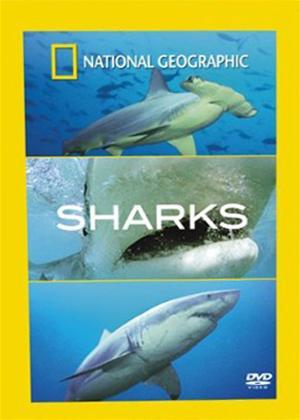 Rent National Geographic: Sharks Online DVD Rental