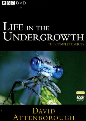 Rent David Attenborough: Life in the Undergrowth: Series Online DVD Rental