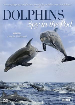 Dolphins: Spy in the Pod Online DVD Rental