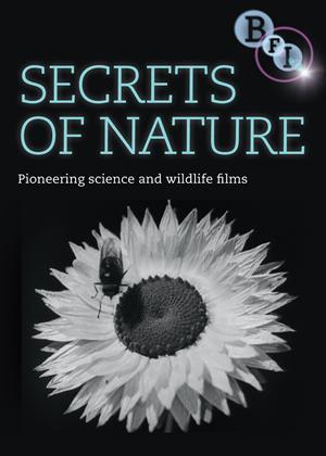 Rent Secrets of Nature Online DVD Rental