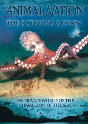 Rent Animal Nation: Octopus Garden Online DVD Rental