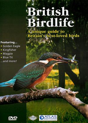 Rent British Birdlife Online DVD Rental
