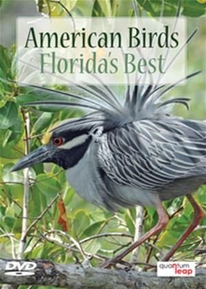 American Birds: Florida's Best Online DVD Rental
