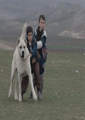 Rent Sivas Online DVD Rental