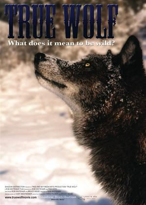 Rent True Wolf Online DVD Rental