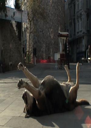 Rent Taskafa, Stories from the Street Online DVD Rental