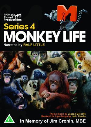 Rent Monkey Life: Series 4 Online DVD Rental