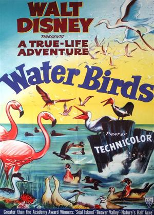 Rent Water Birds Online DVD Rental