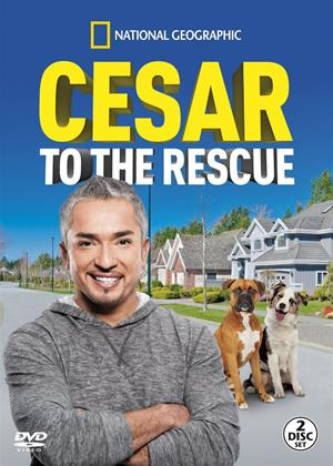 National Geographic: Cesar to the Rescue Online DVD Rental