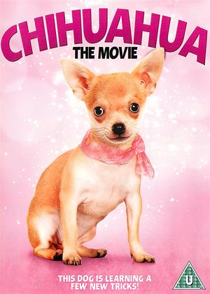 Chihuahua: The Movie Online DVD Rental