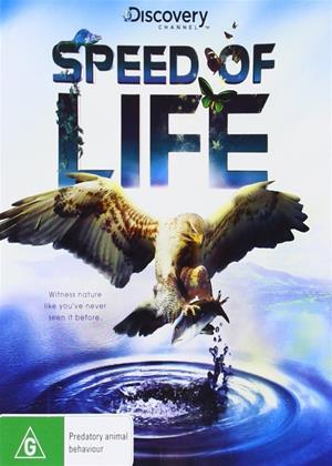 Rent Speed of Life Online DVD Rental