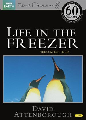 Rent David Attenborough: Life in the Freezer: Series Online DVD Rental