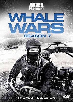 Rent Whale Wars: Series 7 Online DVD Rental