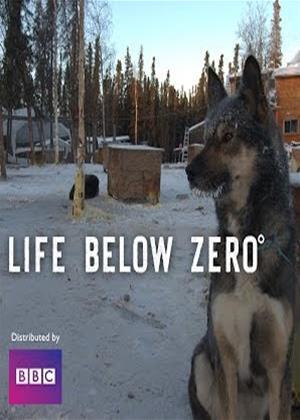 Rent Life Below Zero: Series 7 Online DVD Rental
