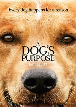 Rent A Dog's Purpose Online DVD Rental
