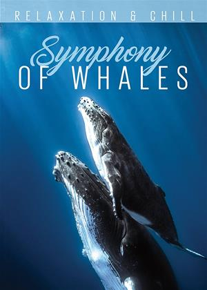 Symphony of Whales Online DVD Rental