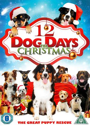 Rent 12 Dog Days Till Christmas (aka 12 Dog Days of Christmas) Online DVD Rental
