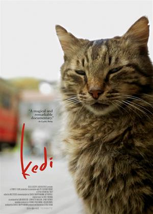 Kedi Online DVD Rental