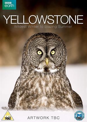 Yellowstone: Wildest Winter to Blazing Summer Online DVD Rental