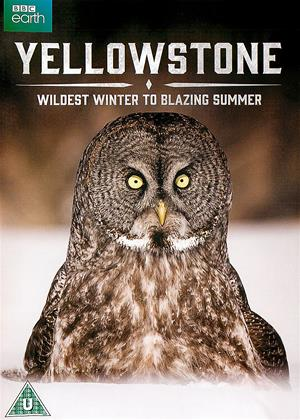 Yellowstone: Wildest Winter to Blazing Summer Online DVD Rental