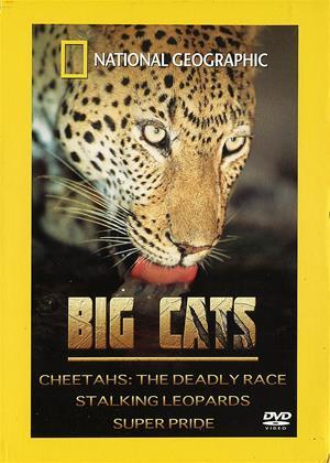 Rent National Geographic: Big Cats Online DVD Rental