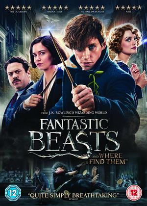 Rent Fantastic Beasts and Where to Find Them Online DVD Rental