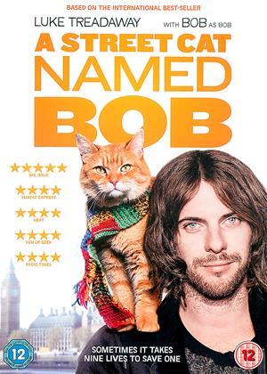 Rent A Street Cat Named Bob Online DVD Rental
