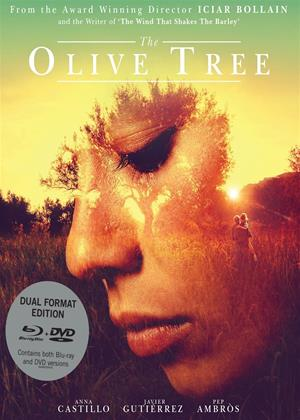 Rent The Olive Tree (aka El Olivo) Online DVD Rental