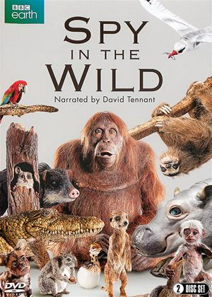 Rent Spy in the Wild Online DVD Rental