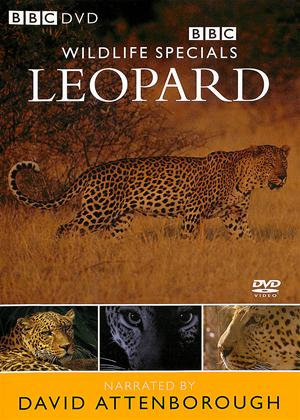 Wildlife Specials: Leopard Online DVD Rental