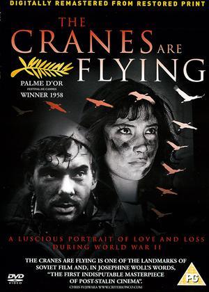 Rent The Cranes Are Flying (aka Letyat Zhuravli) Online DVD Rental
