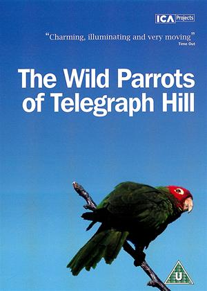 Rent The Wild Parrots of Telegraph Hill Online DVD Rental