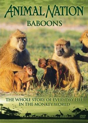 Rent Our World Their World: Baboons: The Whole Story Online DVD Rental