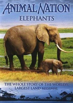 Rent Our World Their World: Elephants: The Whole Story Online DVD Rental