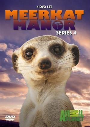 Rent Meerkat Manor: Series 4 Online DVD Rental