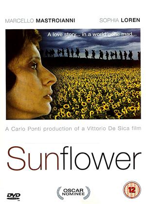 Rent Sunflower (aka I girasoli) Online DVD Rental