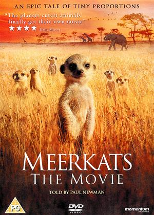 Rent Meerkats: The Movie Online DVD Rental