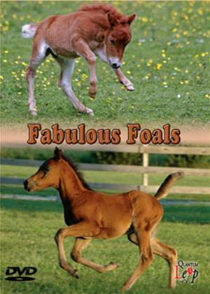Rent Fabulous Foals Online DVD Rental
