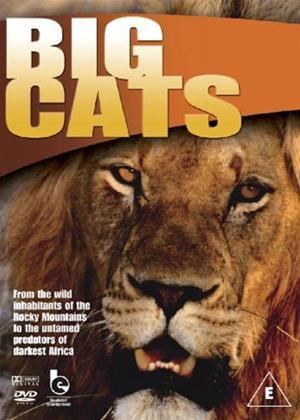 Rent Wildlife: Big Cats Online DVD & Blu-ray Rental