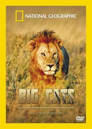 Rent Big Cats: Superpride Online DVD Rental